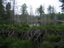 Nature Wilderness