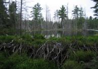 nature-wilderness1